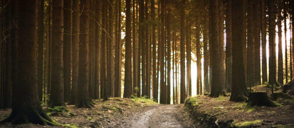 Hoe kan een eco uitvaart in de praktijk vorm gegeven worden?